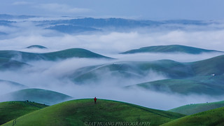 Spring Rolling Hills with Low Fog