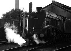 GWS 73716bwcr (kgvuk) Tags: gws didcot didcotrailwaycentre unionofsouthafrica 60009 a4 pacific 462 steam locomotive engine train railway lner br britishrailways