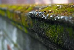 Mossy Stone Ledge (Orbmiser) Tags: mzuikoed1240mmf28pro 43rds em1 mirrorless olympus ore portland m43rds stone ledge edge moss