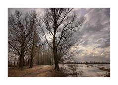Loevestein, de Waarden (cees van gastel) Tags: ceesvangastel canoneos550d sigma1020mm landschap landscape nature natuur water skies luchten trees bomen nederland netherlands waardenvanloevestein gelderland