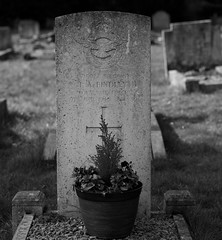 CWGC Sergeant T A Bindley Royal Air Force (IanAWood) Tags: bringoutyourdead citiesofthedead graveyards harrowwealdcemetery headstonehunting lbofharrow londoncemeteries londondead nikkorafs58mmf14g nikondf stanmore uxbridgeroad walkingwithmynikon