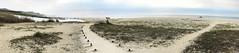 estuary san jose (ikarusmedia) Tags: morning sky clouds beach sand estuary palms trees grass walking trail lake san jose del cabo baja california sur mexico panorama ocean pacific