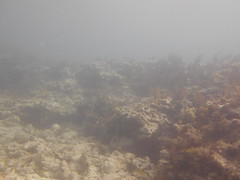 Moving Molasses Morning Scuba Fun Florida Sunshine (Sail Fish Scuba) Tags: keylargo molassesreef thingstodokeylargo