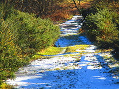 Icy Path (B4bees) Tags: footpath wintry weather downhill slippy findatie kinross lochleven