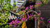 Hong Kong Flower Show 2018 (kcma17) Tags: causeway bay flower hk hong kong show island victor park 維多利亞公園 花 銅鑼灣 香港島 香港花卉展覽 香港