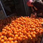 orange shopper thumbnail