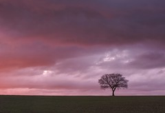 Simply Red (Captain Nikon) Tags: simplyred stunning sunset sundown amazingnature weather redskyatnight lonetree lonesometree silhouette simplicity nikon stantonbydale derbyshire england greatbritain uk landscapephotography outdoorphotography outdoorphotographer nikon18105mm
