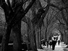Under the Archway (Explore, April 3) (Mildred Alpern) Tags: trees branches arch people walkers sidewalk outdoors monochrome blackandwhite