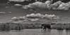 Africa! (Thomas Retterath) Tags: anabezicamp afrika africa zambia sambia lowerzambezi 2017 wildlife adventure natur nature river fluss sambesi allrightsreserved thomasretterath copyrightthomasretterath baum tree mountain hill berg gebirge sundown sonnenuntergang sunset himmel sky coth5 specanimal specanimalphotooftheday