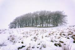 April Snow Showers (D Cation) Tags: scotland eastrenfrewshire eaglesham moor copse trees snow wintry ice frozen
