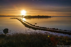 Islandhill Sunrise (dareangel_2000) Tags: islandhill comber countydown seaside shore coastline coastal seascape seascapephotography dariacasement northernireland landscape sunrise dawn breakofday daybreak sunup