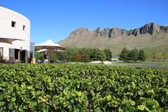 Te Mata Peak from Craggy Range Winery (Karen Pincott) Tags: winery craggyrangewinery tematapeak hawkesbay newzealand autumn vines hills restaurant