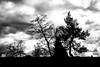 Kahler Asten (841,9 m ü. NHN) (MR@tter) Tags: bäume deutschland hochsauerlandkreis kahlerasten nrw natur sauerland silhouette winterberg sw sonydscrx100 landscape bw tree trees geotagged
