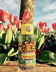#1812 #parishaydar #lafayette #cologne #colognes #perfume #parfum #kinghaydar #france (creamgland1) Tags: 1812 parishaydar lafayette cologne colognes perfume parfum kinghaydar france