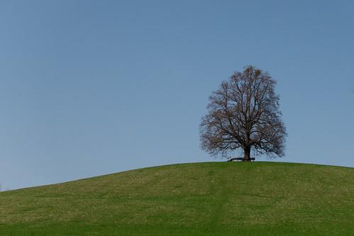 The Dreaming Tree (II)
