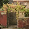 The old forgotten garden gate (Vidya...) Tags: old forgotten garden gate flowers creeper rusty dirty