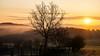 fog and fire (Wöwwesch) Tags: sonnenaufgang nebel feuer sunrise fire fog trees gras colours nature morning walk sun spring