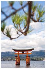 The Torii Gate of Itsukushima Shrine (zhafransyah) Tags: miyajima itsukushima hiroshima torii gate japan shrine shinto architechture nikon