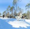 Dogsledging_Saija Lodge (SaijaLodge) Tags: husky safari huskysafari dogsledding saijalodge saija saijanlomakartano taivalkoski visittaivalkoski visitwildtaiga visitfinland