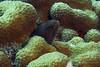In a coral garden (Jeff Mitton) Tags: moray morayeel coral marine tropical reef coralreef scuba bonaire netherlandantilles caribbean caribbeansea earthnaturelife wondersofnature