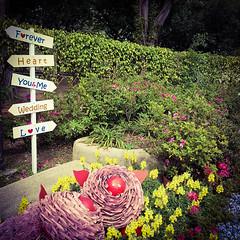Miserably good distractions (Rad.iant/Blan_k) Tags: taipei flowers love marriage forever heart wedding lies garden park greenery taiwan