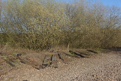 Old railway sleepers by trackbed between Catcliffe and Treeton,  Sheffield  (former SDR route)   April 2018 (dave_attrill) Tags: catcliffe sheffield railway line disused trackbed remains goods sdr sleepers abandoned treeton ballast april 2018 sheffielddistrictrailway southyorkshire