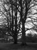 Aldershvile slotsruin (holtelars) Tags: asahi pentax 645 pentax645 645n 6x45 smcpentaxfa 4585mm f45 120 film 120film foma fomapan fompan200 fompan200creative 200iso mediumformat analog analogue blackandwhite classicblackwhite bw monochrome filmforever ishootfilm filmphotography xtol homeprocessing larsholte aldershvile slotsruin ruin bagsværd danmark denmark tree
