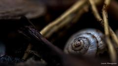 Casa abbandonata (laura.mnz) Tags: macro macromondays natura colore boke nature color lumaca chiocciola spirale fibonacci legno pioggia casa home rain wood snail animale animal spiral