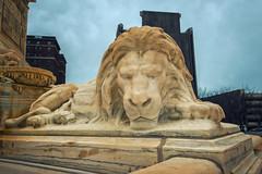 City Hall Lion (Buffalo, New York) (Kᵉⁿ Lᵃⁿᵉ) Tags: buffalo geo:lat=4288646639 geo:lon=7887818947 geotagged newyork unitedstates usa 65niagarasquare architecturalstyleartdeco architecture art artdeco artdecobuilding artdecolandmark buf buffalocityhall buffalonewyork building cityhall cityhallbuilding cityofbuffalo clouds countyandcityhall dietelwadejones eriecounty eriecountynewyork eriecountyny historic historicamericanbuilding historiclandmark historicplace johnwcowpercompany landmark municipalgovernment nationalregisterofhistoricplaces niagrasquare nikon nikond800 ny panoramicimage sculpture sky statue structure tourism touristattraction traveldestination travelphotography usnationalhistoriclandmarkdistrict usnationalregisterofhistoricplaces lion lionsculpture