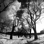 Post winter walk thumbnail