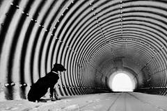 Auf der anderen Seite (flori schilcher) Tags: schilcher röhre winter schnee tunnel hund luna twop
