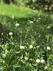 Good evening for everyone 🌷 (basem_teacher) Tags: farmers farmer pissenlit flowers lighting lightroom photoshot iphoneshot iphone7plus landscape moments scenery scene view greenlands morning macro nature