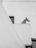The neighbor dog (carlosgonzalezh.colombia) Tags: geometrical dog neighbor architecture can black white wall home shapes contrast canon 60d geometria perro vecino arquitectura cachorro negro y blanco muro hogar figures contraste