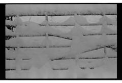 P60-2018-015 (lianefinch) Tags: argentique argentic analogique monochrome blackandwhite blackwhite bw noirblanc noiretblanc nb analog hiver winter snow neige frozen gelé graphic