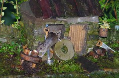 mouse reaching for table (Simon Dell Photography) Tags: wild wood mouse little stone house cottage old english country garden dry walls model micro toy rodent animal cute funny awesome creature mice sheffield shirebrook valley s12 simon dell photography