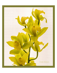 Happy Spring (cindy-lou-boo) Tags: orchid stem branch flower nature green chartreuse petal floral pretty spring