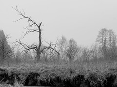 Foggy photo Session (madmattus) Tags: lumix lumixde panasonic lumixg81 photochallenge photochallenges learnfotograph learnphotography cold germany winter coldday landscapelovers landscapephotography forggensee füssen allgäu fotografie beautiful blackandwithe blackandwithephoto blackandwithephotography fog foggy