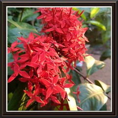 Perfect shot (Abraham Jacob N) Tags: flowers nature kottayam kerala india