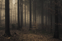 Silent Enjoyment (Netsrak) Tags: baum bã¤ume eu europa europe forst januar january landschaft natur nebel wald fog forest landscape mist nature tree trees winter woods