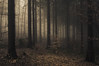 Silent Enjoyment (Netsrak) Tags: baum bã¤ume eu europa europe forst januar january landschaft natur nebel wald fog forest landscape mist nature tree trees winter woods