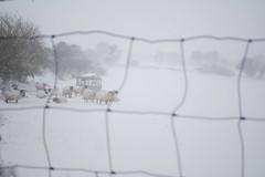 DSC_8011 (seustace2003) Tags: baile átha cliath ireland irlanda ierland irlande dublino dublin éire glencullen gleann cuilinn st patricks day zima winter sneachta sneg snijeg neve neige inverno hiver geimhreadh