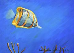Cómo pintar un pez mariposa al óleo (artedivierte) Tags: arte pintura artedivierte pezmariposa óleo artistleonardo tutorial leonardopereznieto patreon