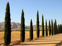 Cypress Land (Mahmoud R Maheri) Tags: landscape cypresstree sarvestan iran fars trees treeline sun sky mountain shadow path