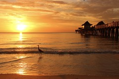 everyone enjoys the sunset (tomflamy) Tags: abend vogel florida strand sonnenuntergang naplesbeach sunset beach pier sea