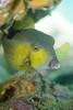 20170715-DSC_9489.jpg (d3_plus) Tags: 南伊豆 southizu drive fish marinesports apnea izu sea j4 underwater nikon1 景色 魚 水中 watersports wpn3 185mm closeuplens マリンスポーツ japan 風景 ニコン 50mmf18 50mm ニコン1 nikonwpn3 ウォータープルーフケース 素潜り クローズアップレンズ skindiving nikkor nikon スキンダイビング nikon1j4 inonucl165m67 sky 海 snorkeling ucl165m67 diving 1nikkor185mmf18 scenery 息こらえ潜水 ズーム port 185mmf18 空 日本 inon waterproofcase シュノーケリング zoomlense
