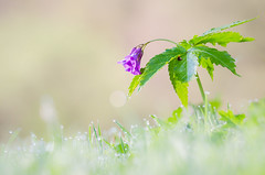 Spring Flower (Miroslav91) Tags: d5100 tamron 150600mm plant close up detail spring nikon