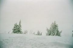 (Alyson Bowen) Tags: 35mmfilm colorfilm kodak kodakfilm nikon nikonfilmcamera nikonf2 mthood oregon pacificnorthwest mountain snow trees snowscape snowstorm landscape nature