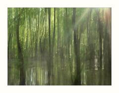 "In the Beginning... (TuthFaree) Tags: ""intentionalcameramovement"" icm blur intentional artistic painterly water reflection sun rays beams ga swga georgia pines rural natural nature primeval 7dwf"