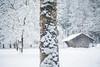 snowy tree (madtacker) Tags: baum natur outdoor schnee hütte winter vintage art bokeh ennamünchen ennalyt 50mm f19 nikon d800 deutschland germany