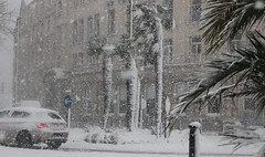 Palm Trees During Torquay Blizzard